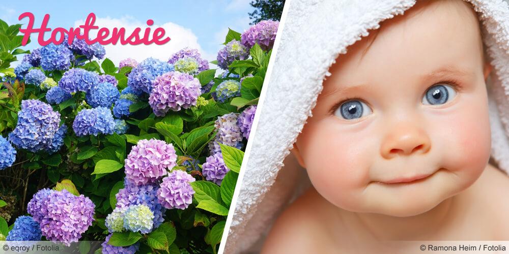 Vornamen nach der Blume Hortensie