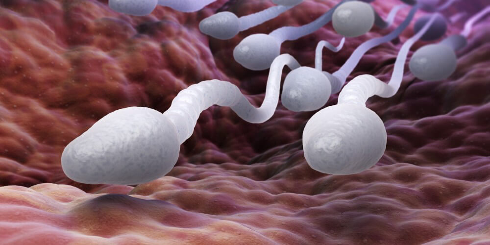 Spermien auf dem Weg zur Eizelle