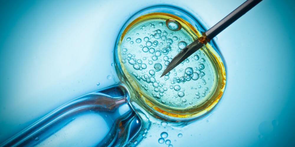In-vitro-Fertilisation unter dem Mikroskop