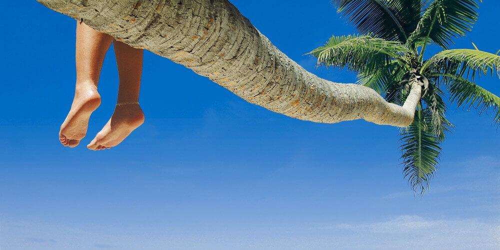 Beine baumeln von einer Palme unter blauem Himmel