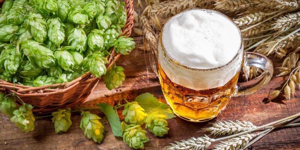 Bier mit Hopfen und Gerste
