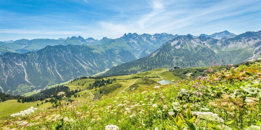 Fellhorn in den Allgäuer Alpen - Blumenwiese mit Blick auf Berge