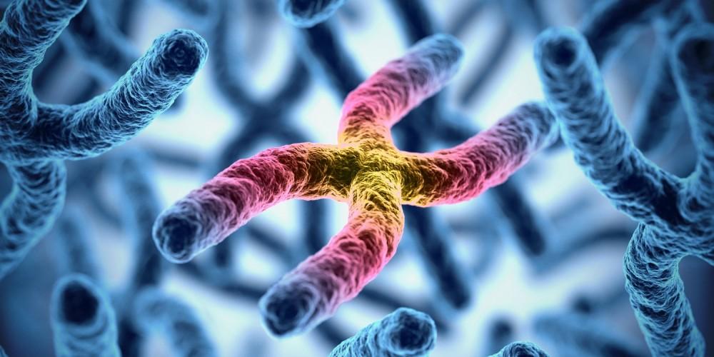 X-Chromosom farblich hervorgehoben