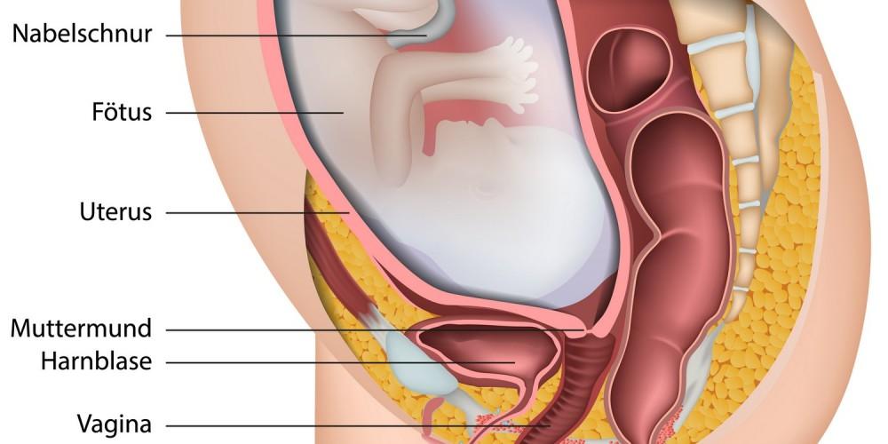 Lage des Fötus im Mutterleib