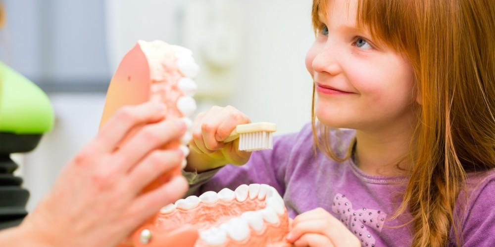 Mädchen mit Gebissmodell beim Zahnarzt
