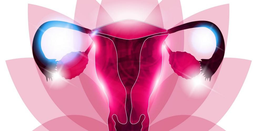 Grafische Darstellung der Vagina