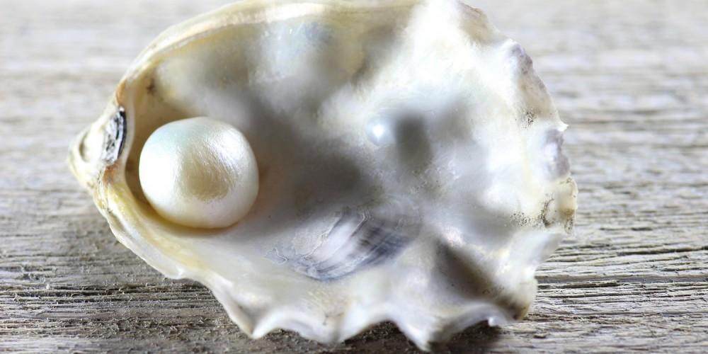 Perle in Muschel auf grauem Holztisch