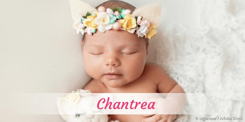 Name Chantrea als Bild