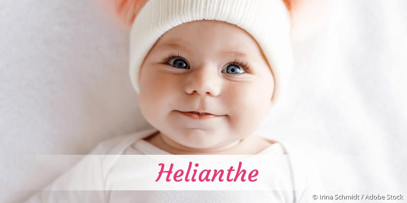 Name Helianthe als Bild