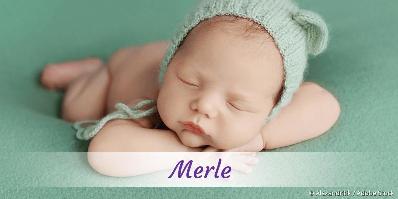 Name Merle als Bild