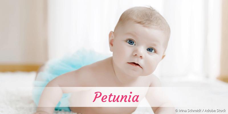 Name Petunia als Bild