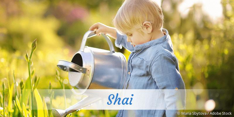 Name Shai als Bild