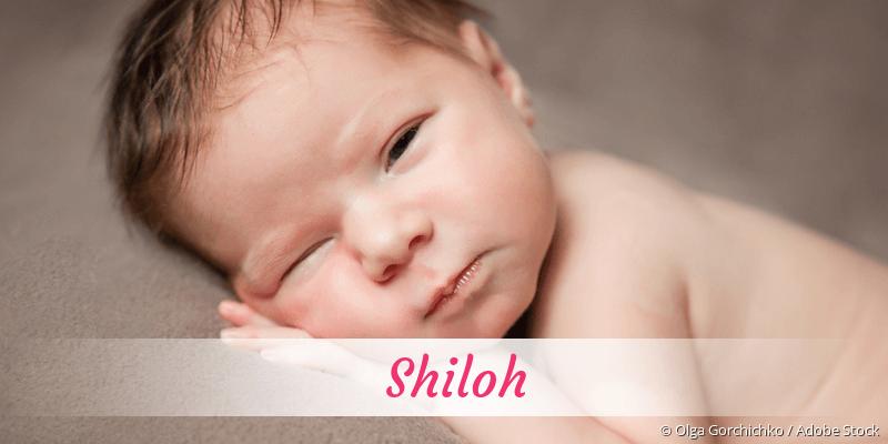 Name Shiloh als Bild